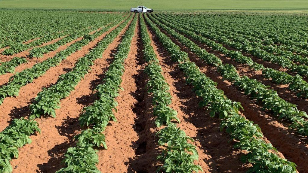 biocomplex for healthy crops