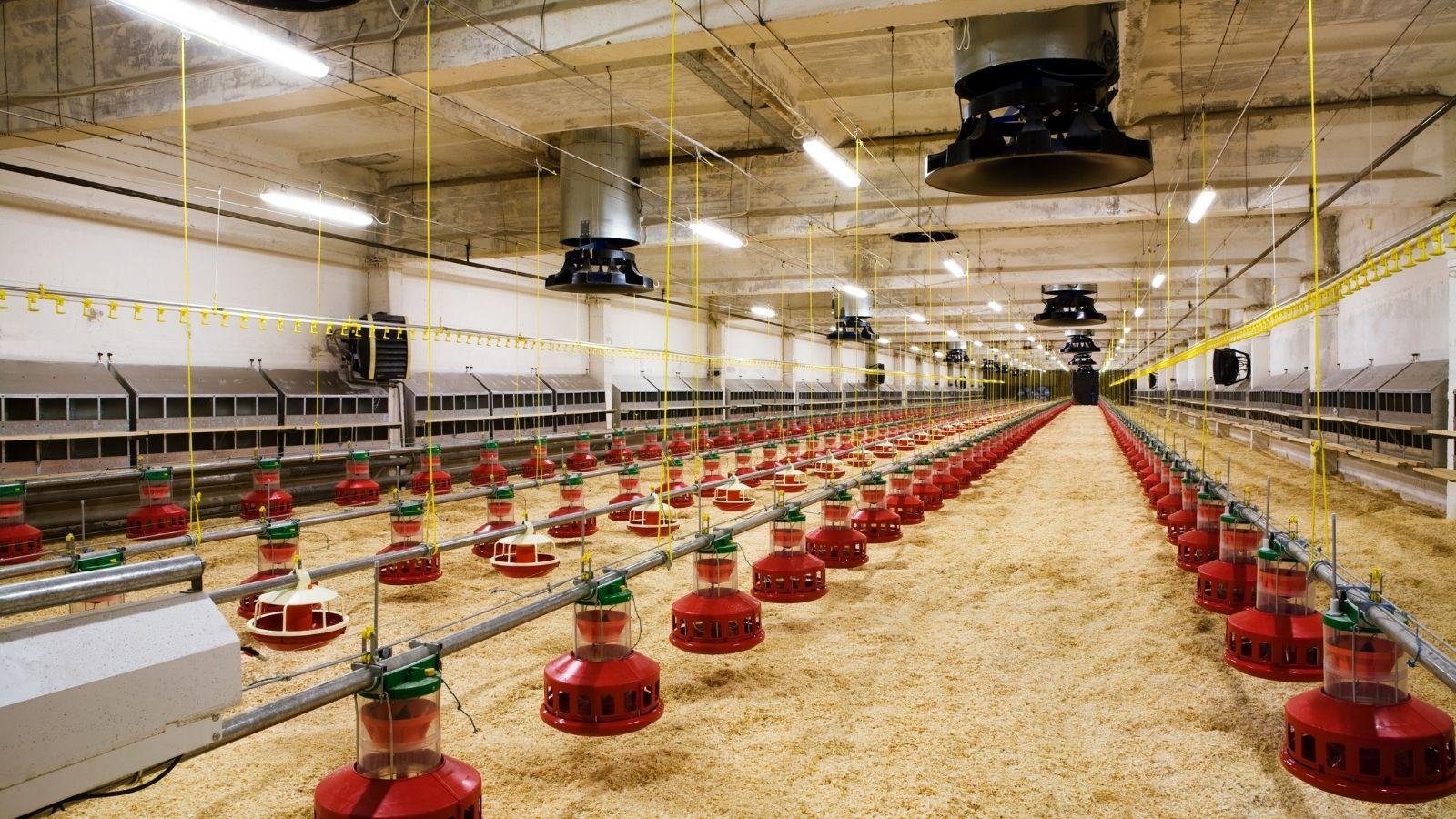 Poultry Sanitiser Case Study