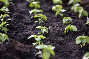 ERDF Crop Funding
